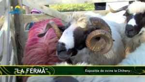 04-09-2019 ferma chieru.mp4_snapshot_00.35